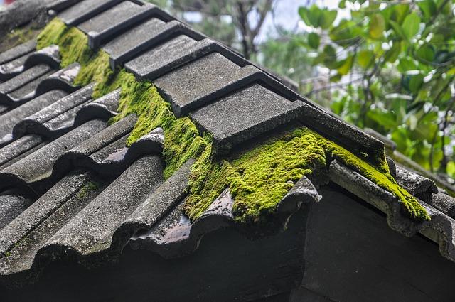 mech na střeše budovy